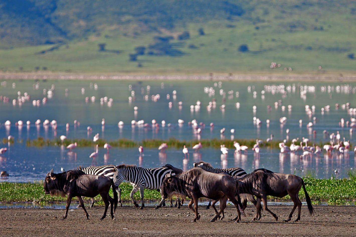 Kilimanjaro Lake Manyara National Park Tours