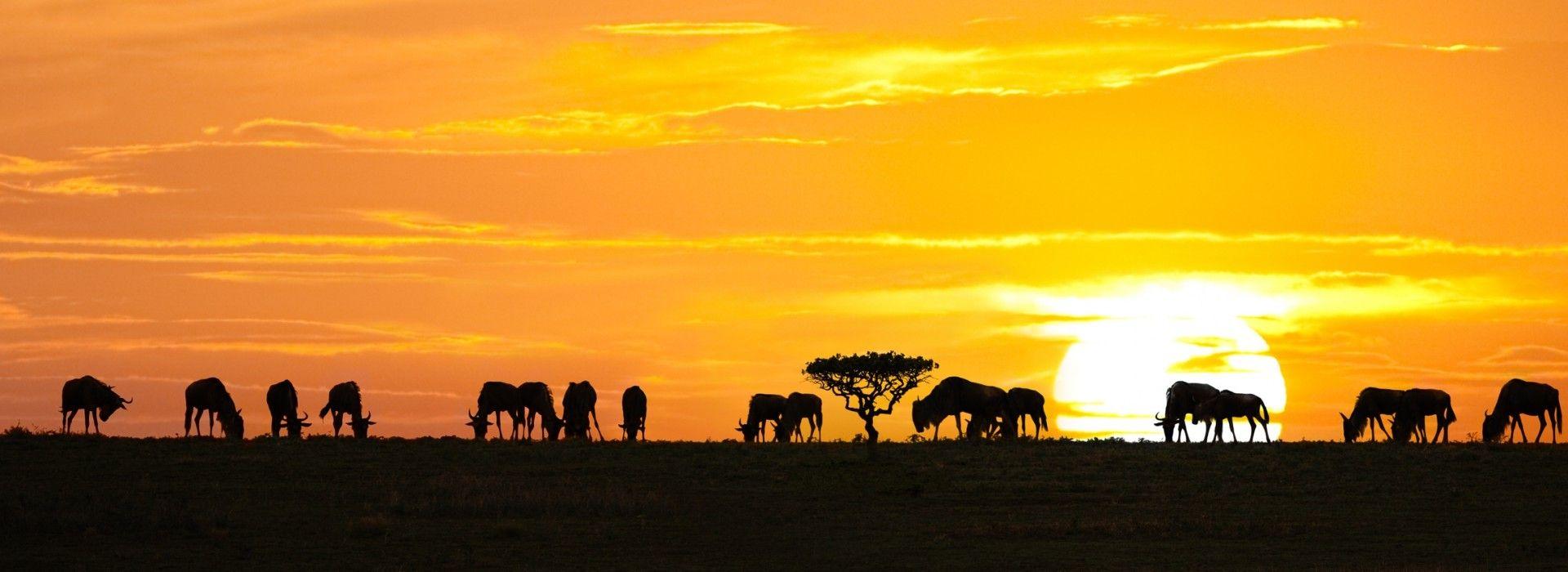 Kilimanjaro Moshi Sunset Tours