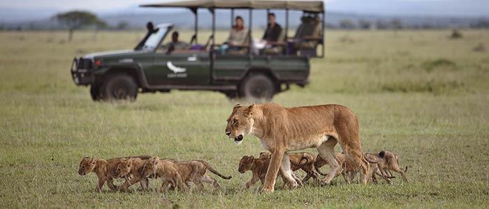 Kilimanjaro Serengeti Safari Tours