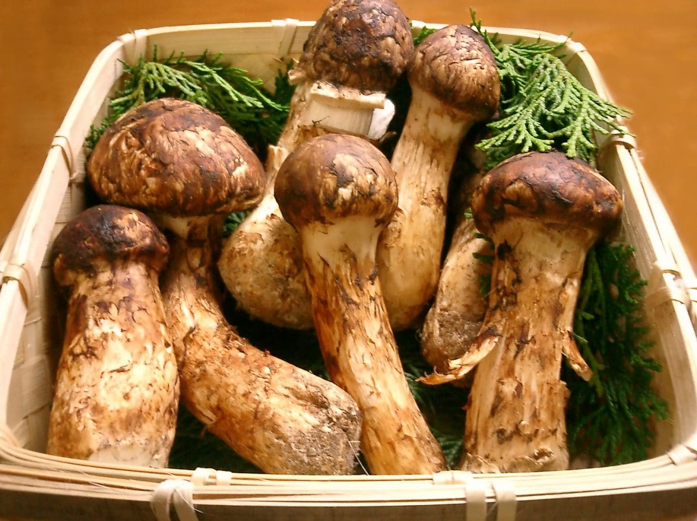 Matsutake Mushrooms - Most Expensive Food in the World