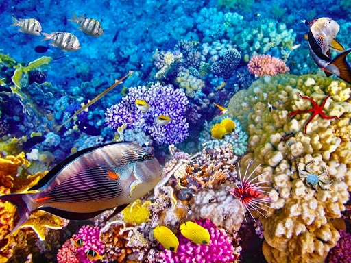 living coral barrier reef in Florida